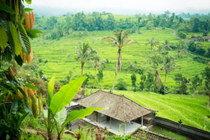 Rice paddies of Bali on the cloudy overcast day with a little rain